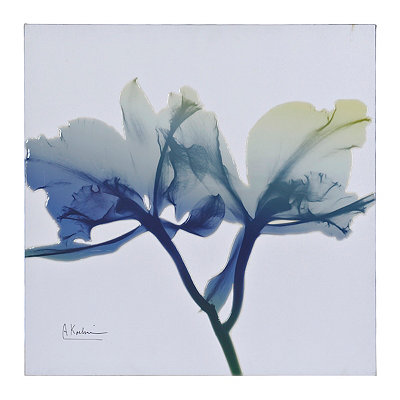 Ombre X-Ray Orchids I Canvas Art Print