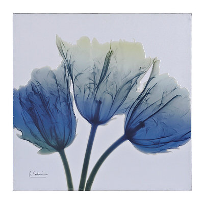 Ombre X-Ray Tulips II Canvas Art Print