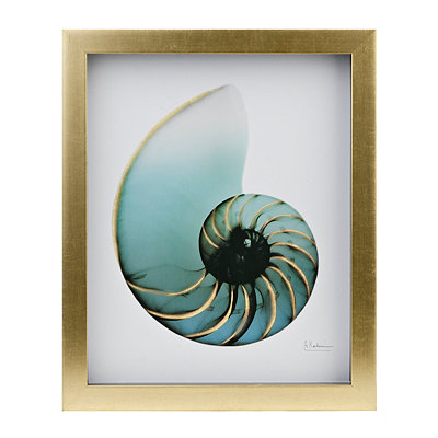 Turquoise X-Ray Shell I Framed Art Print