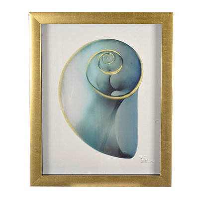 Turquoise X-Ray Shell III Framed Art Print