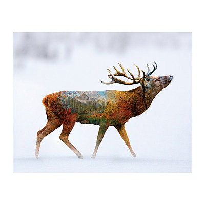 Majestic Deer II Canvas Art Print
