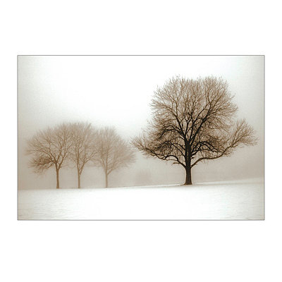 Winter Sun Canvas Art Print