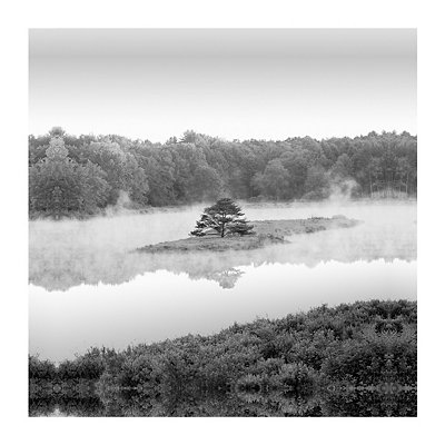 Tree Island Canvas Art Print
