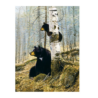 In the Adirondacks Canvas Art Print