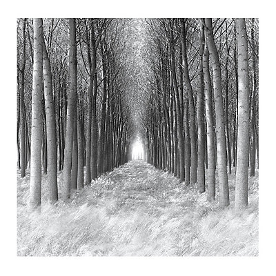 Tree Tunnel Canvas Art Print