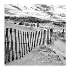 Beach Dunes Canvas Art Print