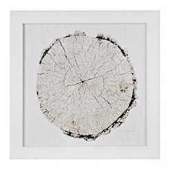 Wood Slice Framed Gallery Print