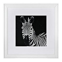 Zebra Framed Gallery Print