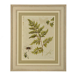 Ferns I Framed Art Print