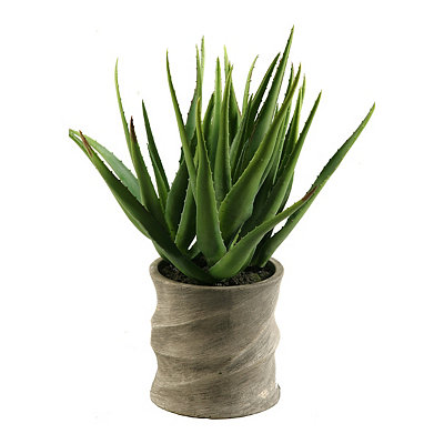 Aloe Vera Arrangement in Natural Ceramic Planter