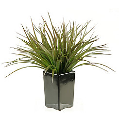 Green Grass Arrangement in Black Ceramic Planter