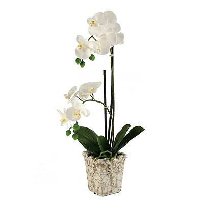 Cream Orchid Arrangement in Crackled Planter
