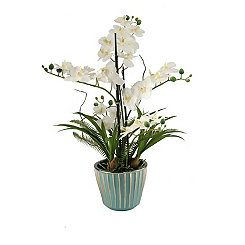 Cream Orchid Arrangement in Fluted Teal Planter