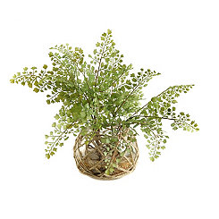 Flat Iron Fern Arrangement in Netted Glass Bowl