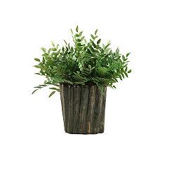 Green Locust Spray Arrangement in Oval Planter