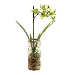 Green Vanda Orchid Arrangement in Netted Bowl