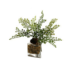 Maidenhair Fern Arrangement in Glass Vase