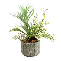 Staghorn Fern Mix Arrangement in Concrete Planter