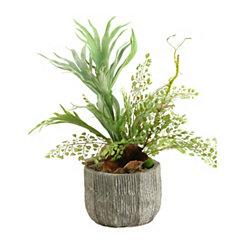 Staghorn Fern Mix Arrangement in Concrete Planter