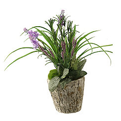 Herb and Lavender Arrangement in Cement Planter