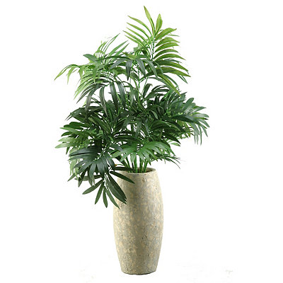 Green Parlor Palm Arrangement in Ivory Vase