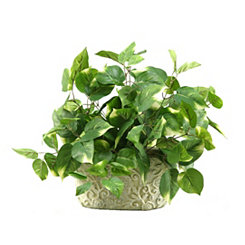 Pothos Ivy Arrangement in Ivory Planter