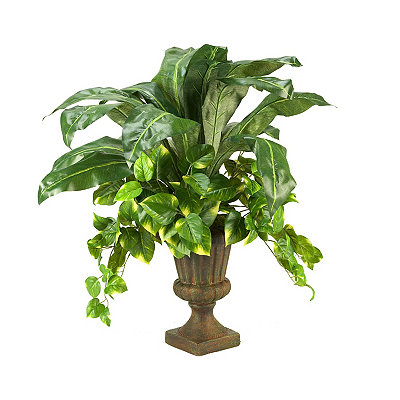 Pothos Ivy and Birdnest Palm Urn Arrangement