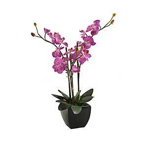 Purple Orchid Arrangement in Black Ceramic Planter