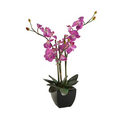 Purple Orchid Arrangement in Black Ceramic Planter