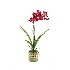 Pink Vanda Orchid Arrangement in Gold Glass Vase