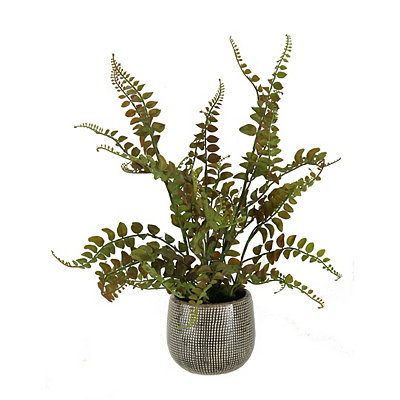 Red and Green Fern Arrangement in Pattern Planter