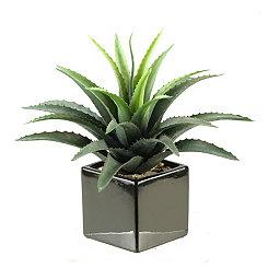 Star Succulent Arrangement in Black Planter