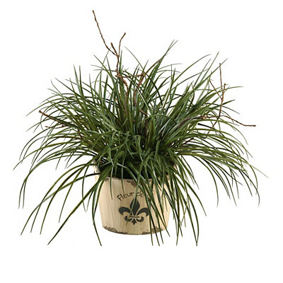 Wild Grass Arrangement in Fleur-de-Lis Planter