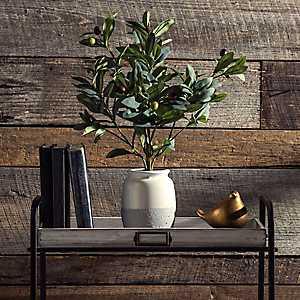 Olive Leaf Arrangement in White Planter
