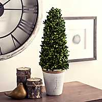 Boxwood Cone Topiary in Distressed Planter