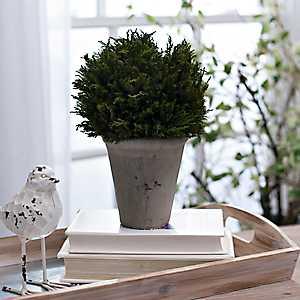Cypress Arrangement in Gray Planter