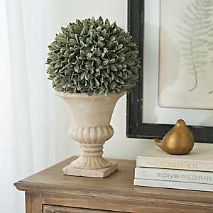 Dusty Bayleaf Topiary