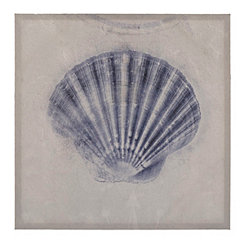 Cobalt Shell Sketch III Canvas Art Print