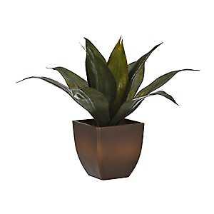 Agave Plant Arrangement in Brown Pot