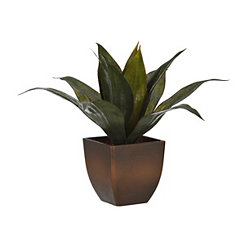 Agave Plant Arrangement in Brown Pot