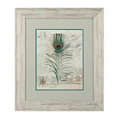 Peacock Feathers II Framed Art Print