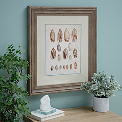 Shell Study I Framed Art Print