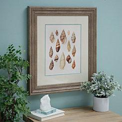 Shell Study II Framed Art Print