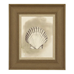 Shell Diagram II Framed Art Print