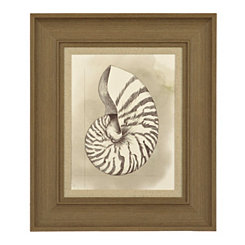 Shell Diagram III Framed Art Print