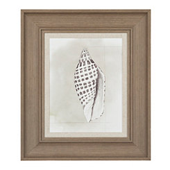 Shell Diagram IV Framed Art Print