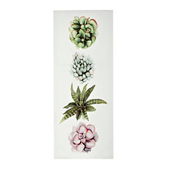 Succulent Plants II Canvas Art Print