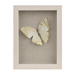 Gold Butterfly Shadowbox