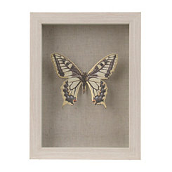 Yellow Butterfly Shadowbox