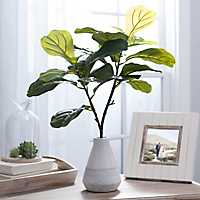 Fiddle Leaf Arrangement in White Planter